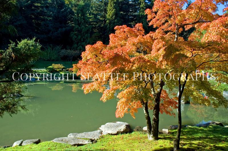Japanese Garden Lake 17