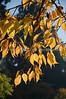 Arboretum Autumn 3
