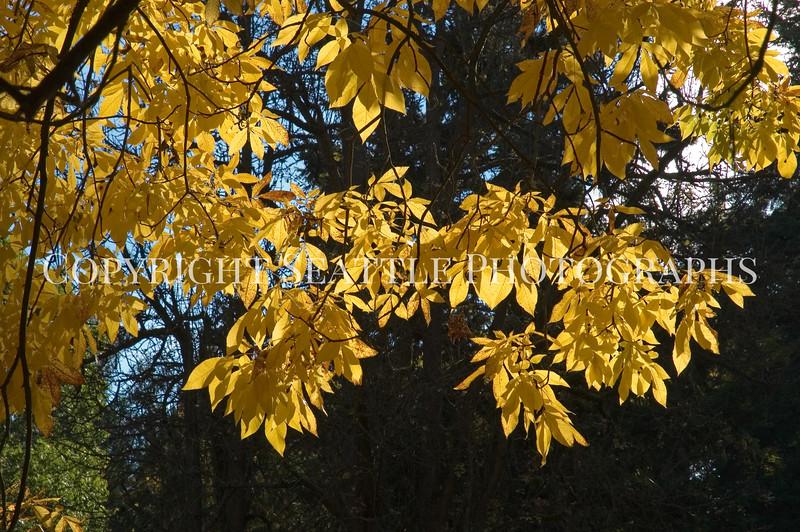 Arboretum Autumn 59
