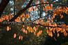 Arboretum Autumn 21