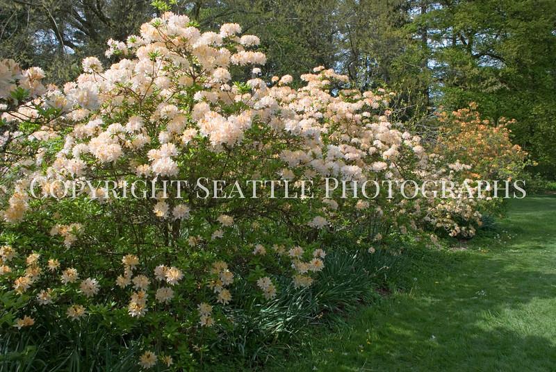 Arboretum Flowers 30