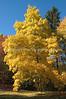Arboretum Autumn 13