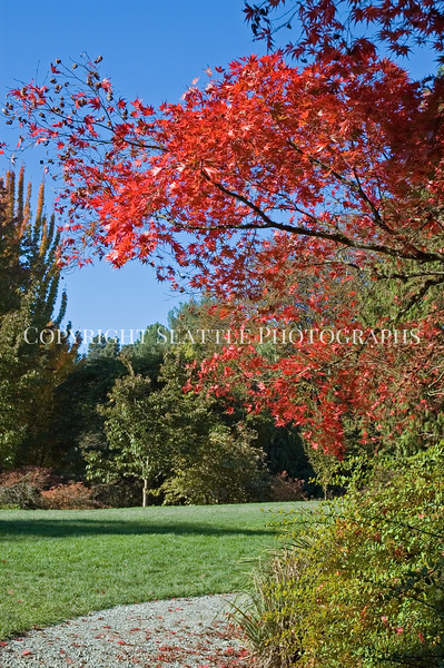 Arboretum Autumn 25