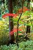 Arboretum Autumn 112