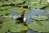 Arboretum Pond 195