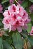 Arboretum Flowers 19