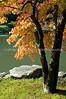 Japanese Garden Lake 21