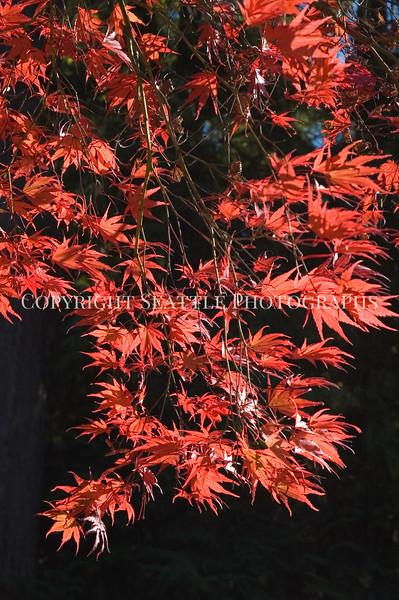 Arboretum Autumn 43