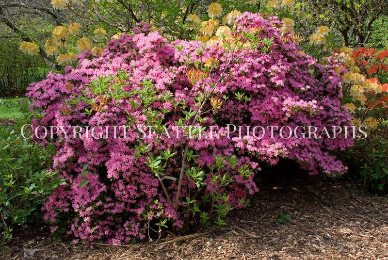 Arboretum Flowers 27