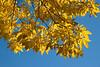 Arboretum Autumn 60