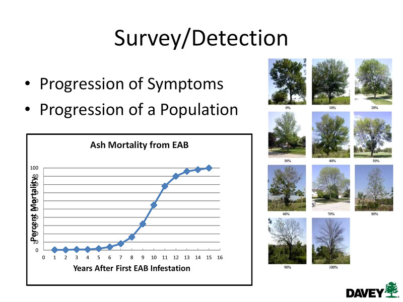 """PROBLEM ON THE Y-axis.  Check the original PDF.<br /> <br /> Jim Zwack, The Davey Institute<br /> from -- 2015 CALCP - Planning your EAB mgmt options - EAB-WKSHP-Jan-2015-Zwack (21)<br /> <br /> Even pre-EAB, canopy-thinning of ash trees would NORMALLY range from 0 - 30% due to environmental stressors.<br /> <br /> VERY early in an EAB infestation, nearly all trees will be in the 0 - 30% canopy-thinning range, and MOST are not infested.  Pest levels are so low that repeated years of attack are required to weaken, then overwhelm tree defenses.  EAB is generally not detectable at this stage, and dendrochronology indicates it probably takes 5 - 7+ years for these early victims to die.<br /> <br /> As you get out around year 6 on this graph, enough trees have died that someone has noticed and is looking hard for early symptoms.  Though many trees have light levels of infestation, they are still healthy enough to manage the internal damage, so exhibit little in the way of drive-by cues.  The beetle population is still low enough that it takes an individual tree 3 - 5 years to die from the time it is determined to be infested.   If planning is complete, then most management tools will work as expected.<br /> <br /> Later in the infestation, when most trees are in the higher ranges of thinning, the good-looking trees in the area are under mass attack from females looking for viable tissue upon which to lay eggs.  The damage inflicted by the resulting larvae (vascular-etching grubs) means that trees with """"great"""" canopy scores of 0 - 20% thinning will plummet to scores of 80 - 100% thinning (dead) in less that 2 years, often 1.  Few management options are available at this point."""