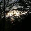 Crépuscule en forêt