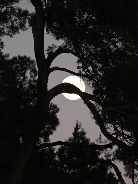 Un arbre et la Lune