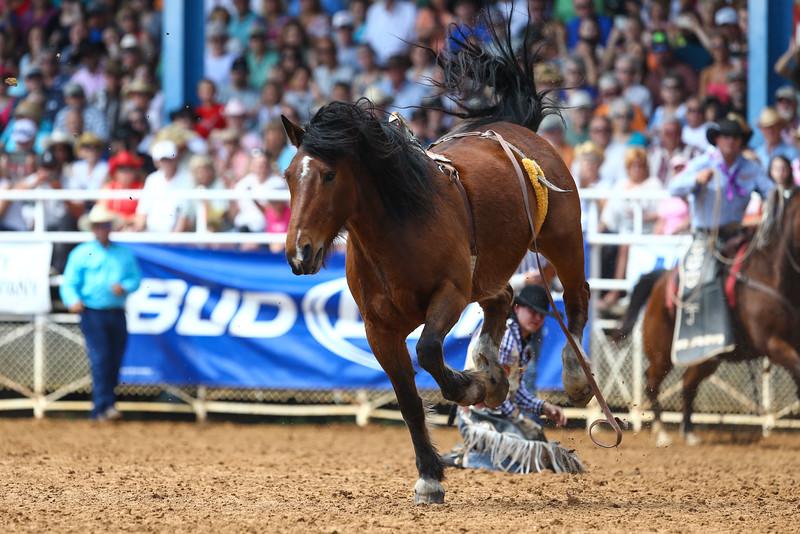 20160313_Arcadia Rodeo-21