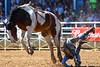 20170311_Arcadia Rodeo-156