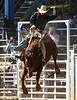 20170311_Arcadia Rodeo-338