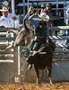 20170311_Arcadia Rodeo-883