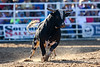 20170311_Arcadia Rodeo-889