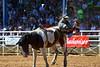 20170311_Arcadia Rodeo-153