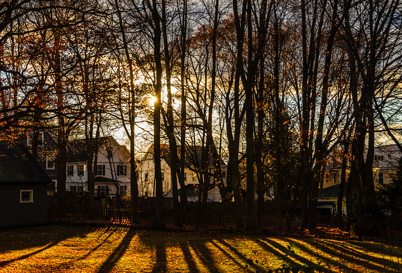 Long winter shadows