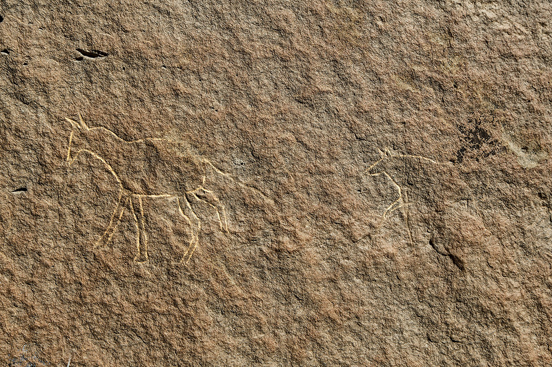 Petroglyph of a horse appearing to be followed by a coyote or wolf.