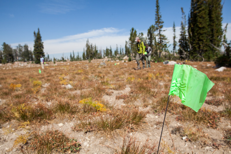 22. A team of archaeologist record a large prehistoric site in the Tetons. The green pin-flags are used to identify artifacts so that we can accurately map the site.