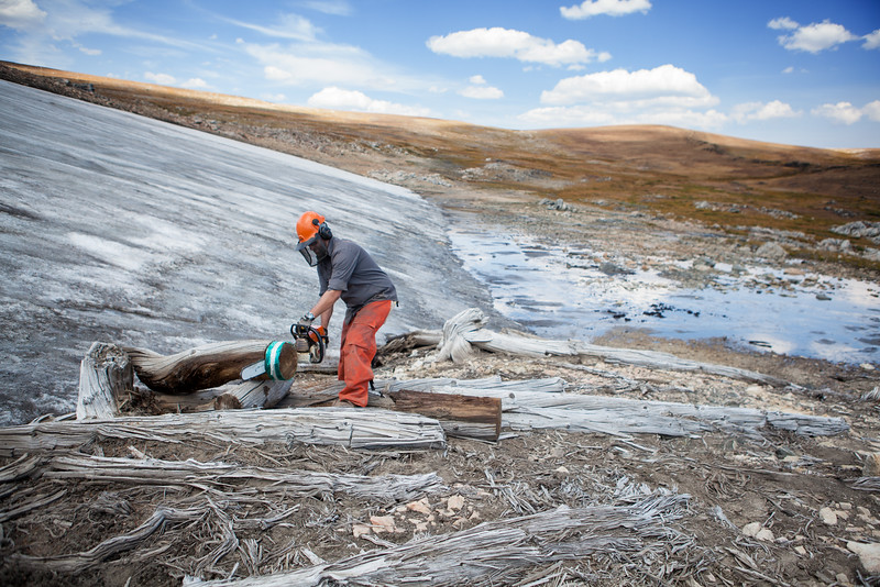 A USGS climate researcher cuts a tree 'cookie' from a previously frozen Whitebark Pine tree in order to reconstruct past environmental conditions in the Rocky Mountains