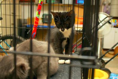 Shawna's Cats September 2008