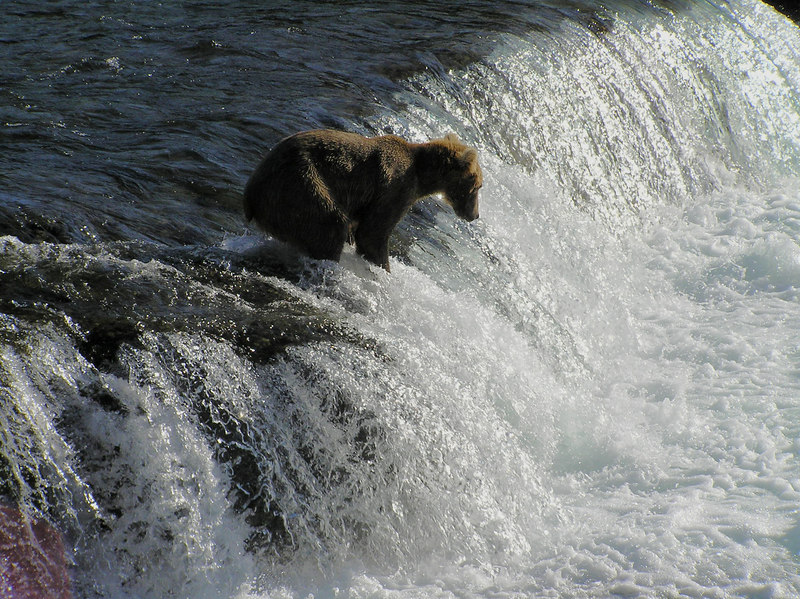 <br>The Next 7 Pictures Are Just Misc. Fishing Bears