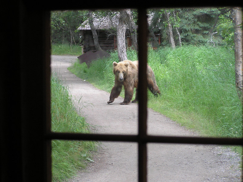 <br>A Camp Visitor While We Were Being Briefed on the Possible Close Proximity of Bears, Even In Camp