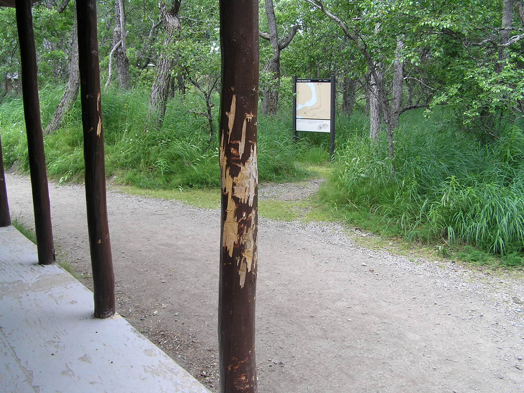 <br>More Bear Markings on the Posts at the Ranger Office