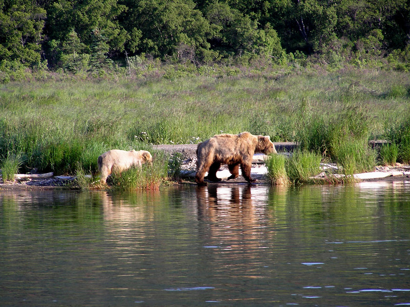 <br>A Sow and Cub Across the River