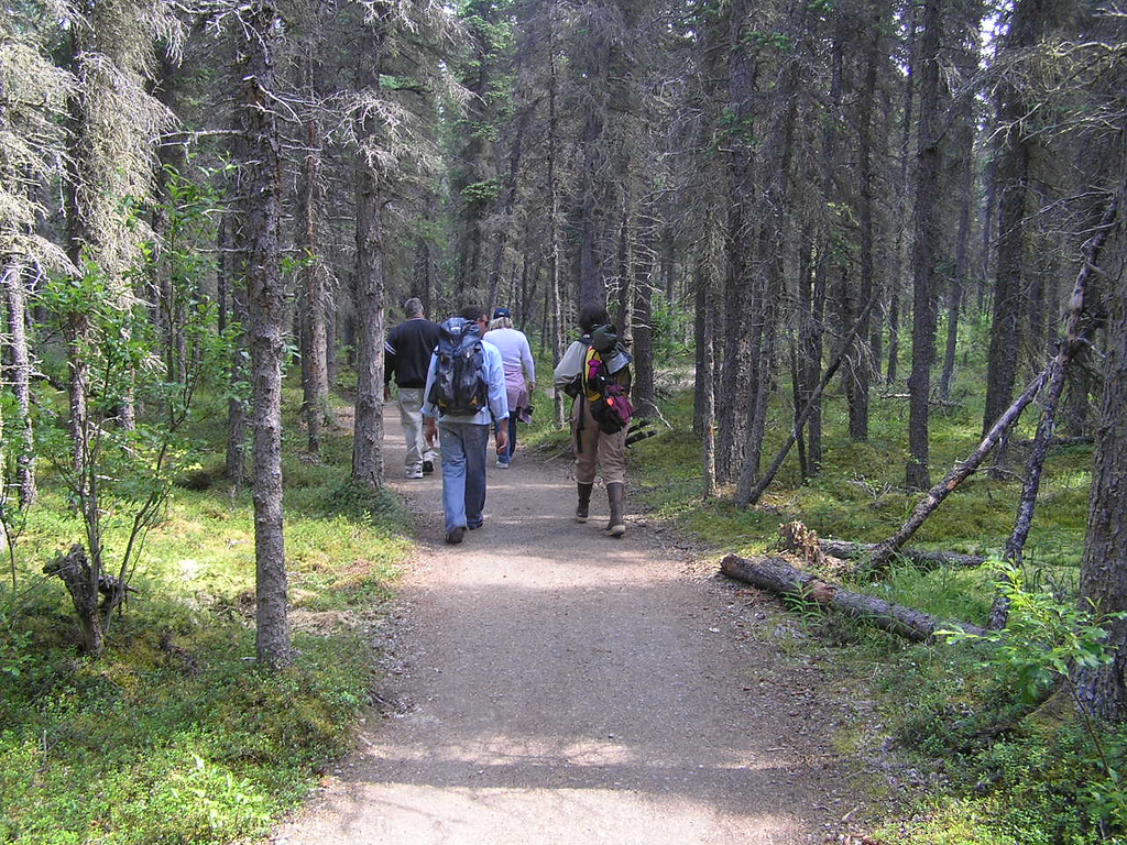 <br>Up the Trail to the Falls