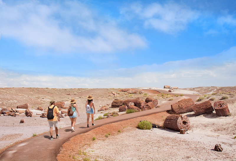 Family hiking on vacation exploring petrified trees.Crystal Forest, Petrified Forest National Park, Arizona, USA,