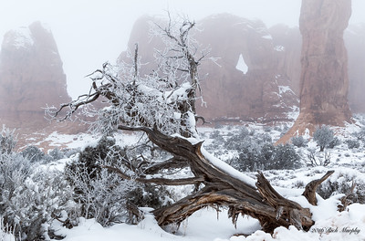 Frozen In Time,  Arches National Park