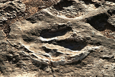 Fossils-002