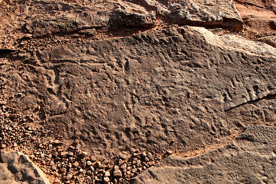 Fossils-001