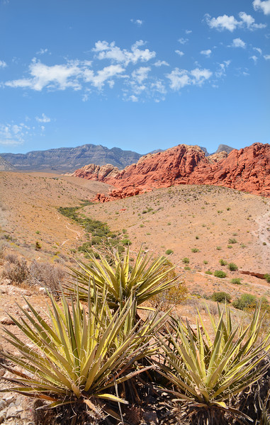 Red Rock Canyon National Conservation Area landscape
