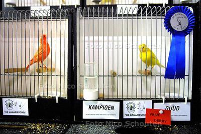 HC 30 JARIG JUBILEM CANARIEPIETEN VERENIGING - Goud voor de Lipochroom (egaal) gele canariepiet van Erwin Rutgers in de jeugd-klasse (RECHTS) - LEIDSCHENDAM 14 NOVEMBER 2003 - FOTO: NICO SCHOUTEN