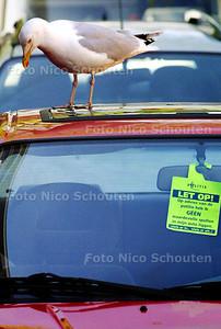 Deze zeemeeuw stoort zich niet aan het kaartje van de politie. DEN HAAG 22 APRIL 2004 - FOTO: NICO SCHOUTEN