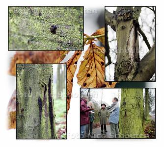 """COMPILATIE KASTANJEZIEKTE - Het begint met kleine slijmige bobbeltjes die snel uitgroeien tot lange """"huilplekken"""", daarna scheurt de bast open en is de boom dood. Specialisten wisselen hun kennis uit. - DEN HAAG 4 DECEMBER 2004 - FOTO NICO SCHOUTEN"""
