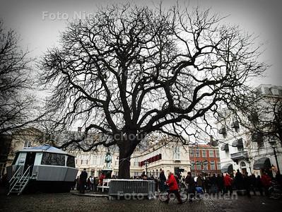 HC - DE EEUWENOUDE KASTANJE VOOR PALEIS NOORDEINDE. Tijdens de aankomst van Pr Bernhard lijkt deze boom nog niet aangetast door de nieuwe kastanje ziekte. Op veel plekken in de stad is een groot aantal bomen al ten dode opgeschreven - DEN HAAG 5 DECEMBER 2004 - FOTO NICO SCHOUTEN