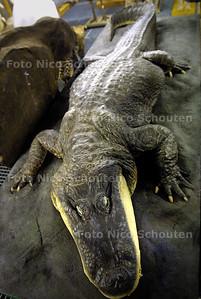 MUSEON DEPOT - Replica reuzen krokodil - DEN HAAG 11 MAART 2003 - FOTO: NICO SCHOUTEN