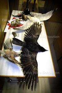 MUSEON DEPOT -  Opgezette vogels - DEN HAAG 11 MAART 2003 - FOTO: NICO SCHOUTEN