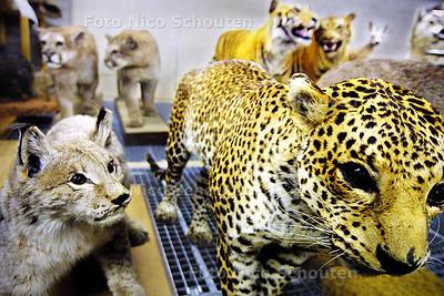 MUSEON DEPOT - opgezette roofdieren - DEN HAAG 11 MAART 2003 - FOTO: NICO SCHOUTEN