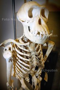 MUSEON DEPOT - Aapskellet  DEN HAAG 11 MAART 2003 - FOTO: NICO SCHOUTEN