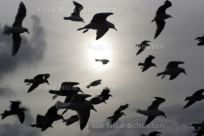 MEEUWEN ZWEVEN IN DE WIND - SCHEVENINGEN 5 NOVEMBER 2004 - FOTO NICO SCHOUTEN