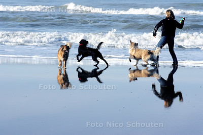 HEERLIJK WEER, HONDEN UITLATEN OP HET STRAND BIJ DUINDORP - DEN HAAG 14 JANUARI 2005 - FOTO NICO SCHOUTEN