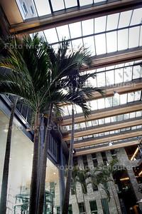 HC - OPENDAG PRINSENHOF, atrium met palmbomen - DEN HAAG 22 JANUARI 2005 - FOTO NICO SCHOUTEN