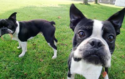 HC/AD - NOTENBOOMPARK, Dit stukje is NIET verboden voor honden, hier mogen de honden dus gewoon los lopen !!! - VOORBURG 7 OKTOBER 2005 - FOTO NICO SCHOUTEN